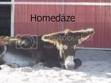Homedaze